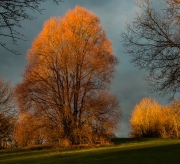 Trees on Fire by Alex Cranswick