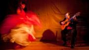 flamenco by r-albright
