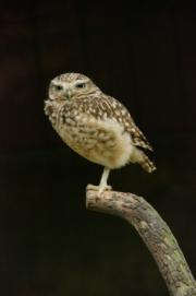 owl_by john-parsloe