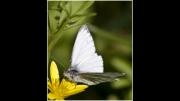 butterfly-in-a-wood by john-day