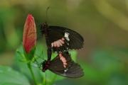 swallowtails by john-parsloe