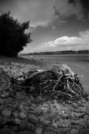 driftwood by mike-stanley