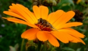 amber-nectar by katherine-davis
