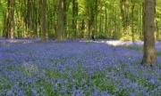spring-blues by katherine-davis