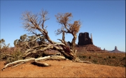 stunted-tree-monument-valley by steve-edwards