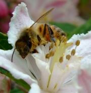 honey-maker by katherine-davis