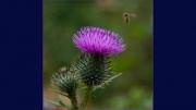 nectar-collector by jim-bullock