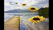 The Sunflower Squadron over Lake Menteith by John Day
