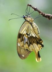 Papilio by John Parsloe