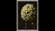 Petal Drop by John Day