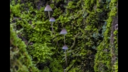 Westonbirt Delicates by Malcolm Cole