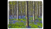 Bluebell Wood by Lyn Day