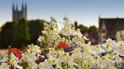 Marlborough in Bloom by Jon Simons