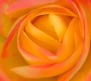 Natural Beauty by Katherine Davis