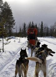 Arctic Mushing by Gary Henderson