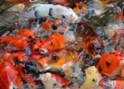 Something Fishy by Katherine Davis