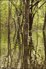 Jungle Reflections by Steve Edwards