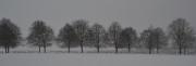 Lydiard Winter by Katherine Davis