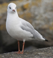 Seagull by Lyn Day