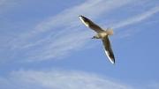 Free as a Bird by Jon Simons