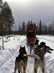 Arctic Mushing by Gary Henderson