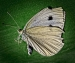 Butterfly-starting-to-decompose-by-John-Day