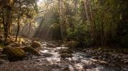 Costa Rican Stream by Alex Cranswick