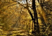 Autumn Rays by Geoff Astle