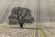 Tree Lines by Andrew Purdy
