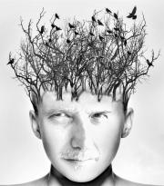 Bird Brain by Mike Stanley