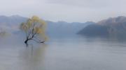 The Wanaka Tree by Neil Hayward