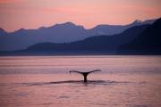 Alaskan Sunset 1 by Gill Marsh