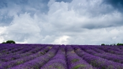 Cloudy Lavender by Ian C Armstrong