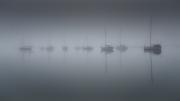 All is Quiet by Dave Young