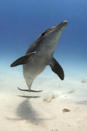 Dolphin by Gill Marsh