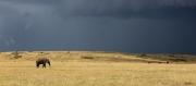 Gathering Storm on the Mara byGill Marsh
