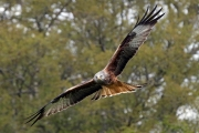 Kite Flying by Gill Marsh