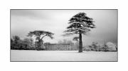 Lydiard Lawn by Chris Pocock FRPS