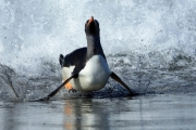 Surfin' Home  by Gill Marsh