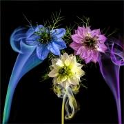 Colour it smoke by Jim Bullock