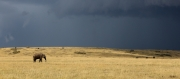 Gathering storm on the Mara by Gillian Marsh