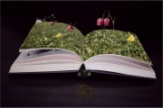 Pop up book of nature by Mike Stanley