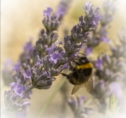 Busy Bee by Lyn Day