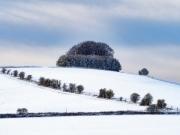Liddington Trees by Mike Buy