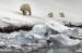 Polar-Bears-Low-Tide-Svalbard-by-EddyLane