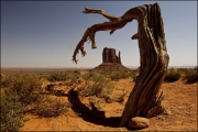 Mitten Monument Valley by Steve Edwards