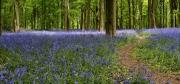 Spring Blues by Katherine Davis