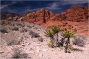 Red Rock Canyon by Steve Edwards