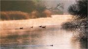 River Kennet at Chilton Foliat_54
