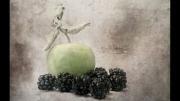 apple-blackberries by lesley-hunt